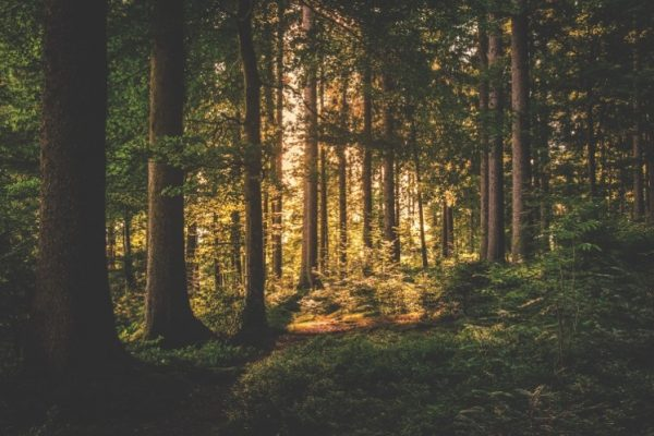 Reforestation stores carbon on land, helping to control global warming.